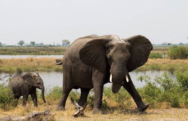 Слоны в Мадуму