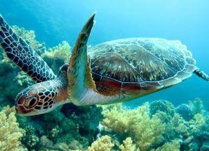 Черепахи живут на острове Джуани
