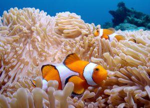 Мир рифов очень богат
