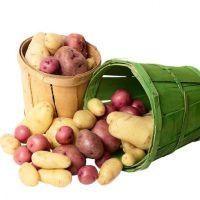 pire krumpir za bebe