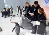 Знакомство с пингвинами