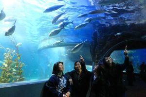 Аквариум Мельбурна - посетители