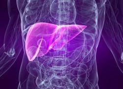 rola wątroby w metabolizmie