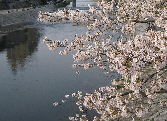 Река Сакура-гава