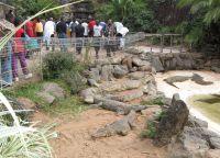 Mamba Village - крокодиловая ферма