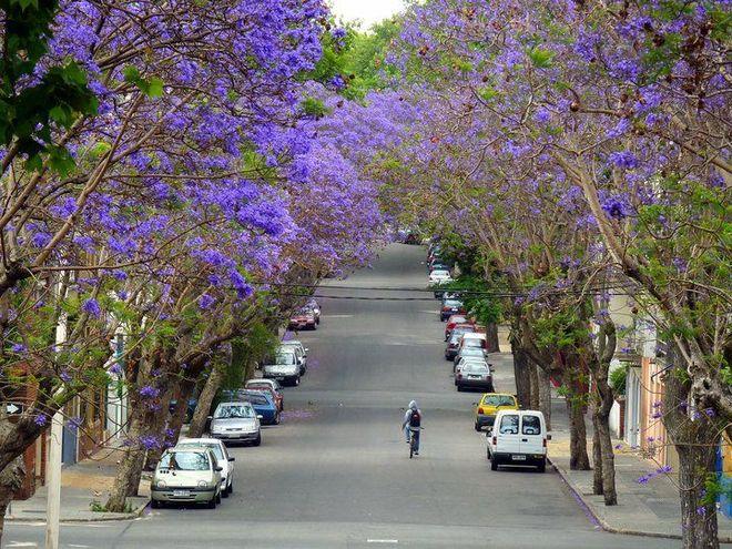 Природа Монтевидео