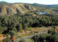 Пальмовая роща в Имуззер