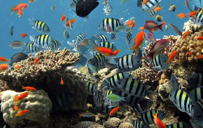 Богатый подводный мир