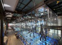 Галерея Динозавров