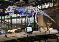 Скелет динозавра в музее естественных наук