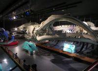 Скелет кита в музее естественных наук