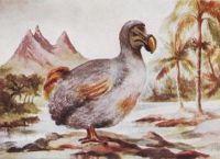 Картина Додо