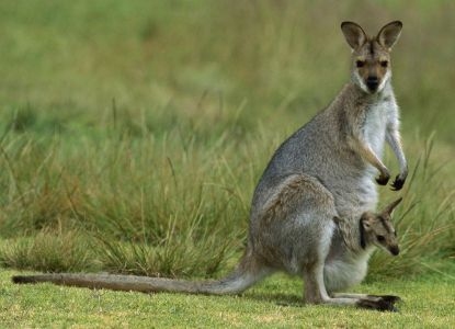 Australijska natura 1