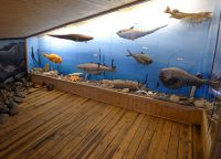 Рыбы в экспозиции музея