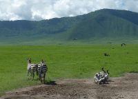 Веселые зебры