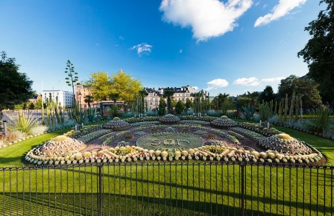 В парке растут кактусы