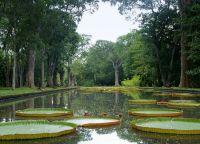 Ботанический сад Памплемус