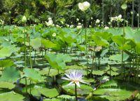 Ботанический сад сэра Сивусагура Рамгулама