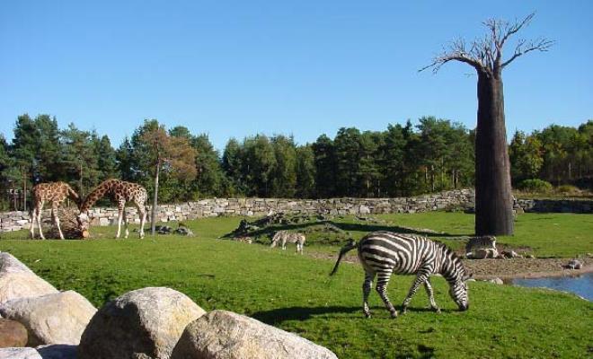 Кристиансанн - зоопарк