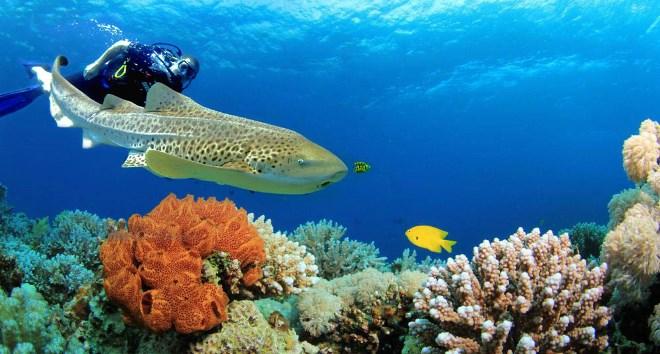 Подводные красоты страны