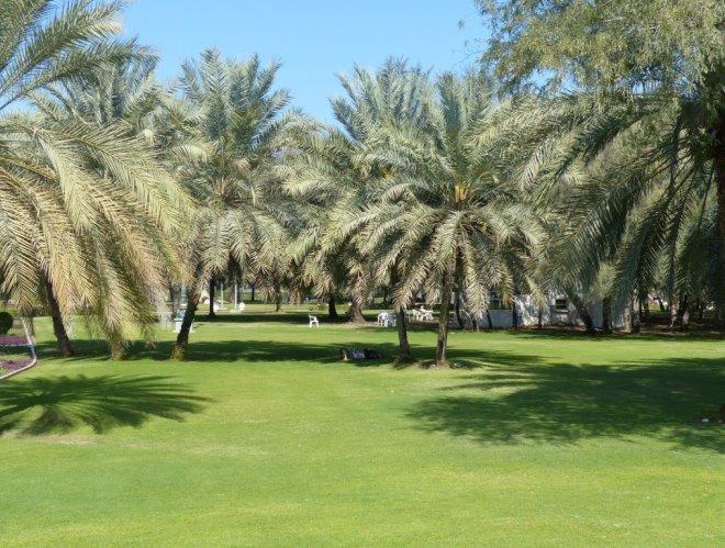 Зелень парка аль-Курм