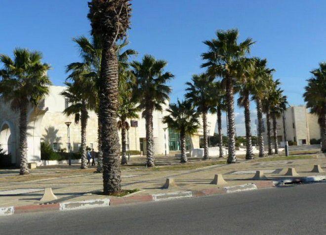 Эвкалипты являются символом города Ор-Акива