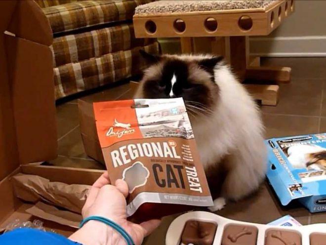 Корм ORIJEN REGIONAL RED CAT