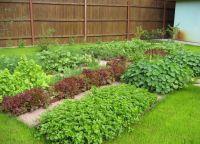 Ozdobny ogród2