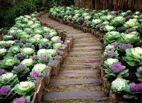 Ozdobny ogród