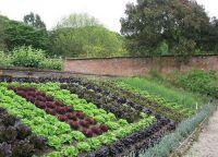 Ozdobny ogród8