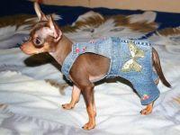 Oblačila za jopiče za pse 2