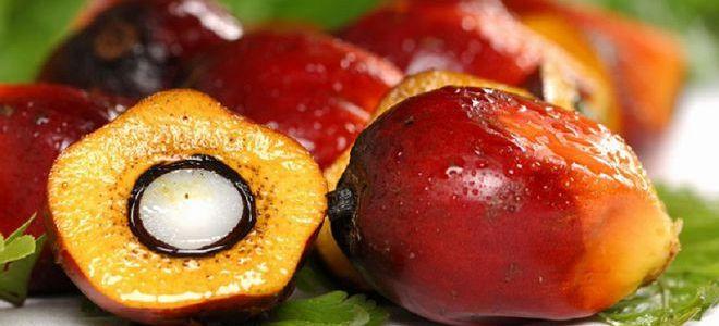 co to jest szkodliwy olej palmowy