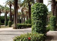 Стволы украшены растениями
