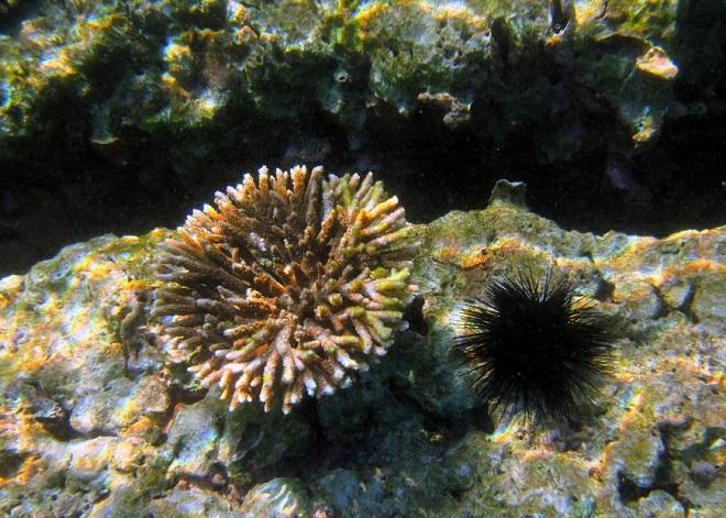 Бриллиантовые острова Омана