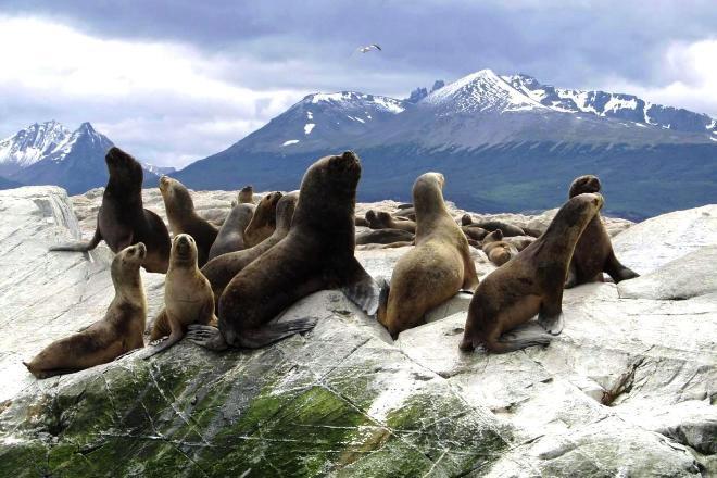 Морские львы в Патагонии