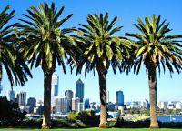 Перт Австралия - здесь растут пальмы