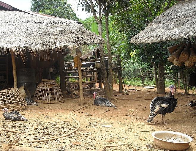 В традиционной  деревне