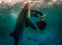 sesja zdjęciowa pod wodą 5