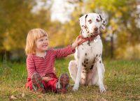 Sesja zdjęciowa z psem 1
