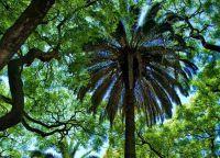 В парке много тропических деревьев