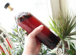 Nalewka z orzeszków piniowych na wódce