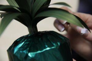 ananas od słodyczy8