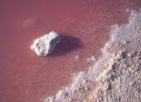 Pink Lake Hiller Australia_4