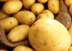 mršavljenja krumpira