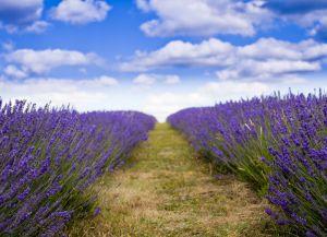 Provence Francuska 2
