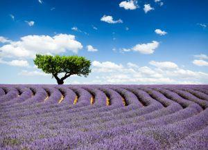 Provence Francuska 5