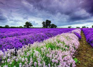 Provence Francuska 7