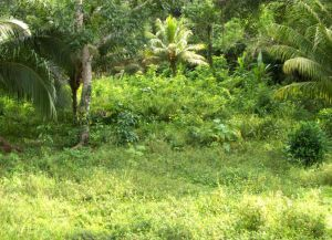 Вечнозеленая природа Пуэрто-Кортеса