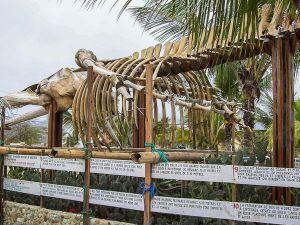 Разрушенный порт Пуэрто-Лопес, скелет огромного кита