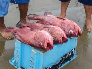 Продажа товаров на рыбном рынке